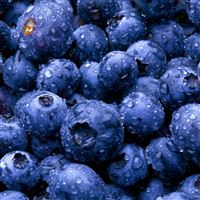 Blue Berries iPad wallpaper