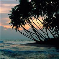 Palm Trees iPad wallpaper