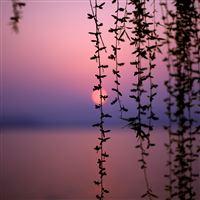 Sunset Vines iPad wallpaper