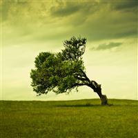 Windy Tree iPad wallpaper