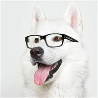 Smart Dog iPad wallpaper