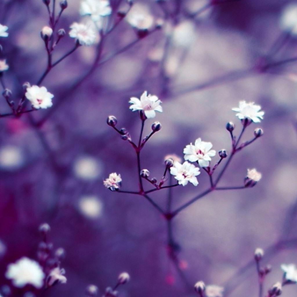Nature Flowers Macro IPad Wallpaper