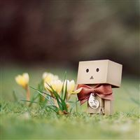Danbo And Flower iPad wallpaper