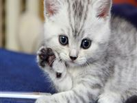 Cat Kitten iPad wallpaper