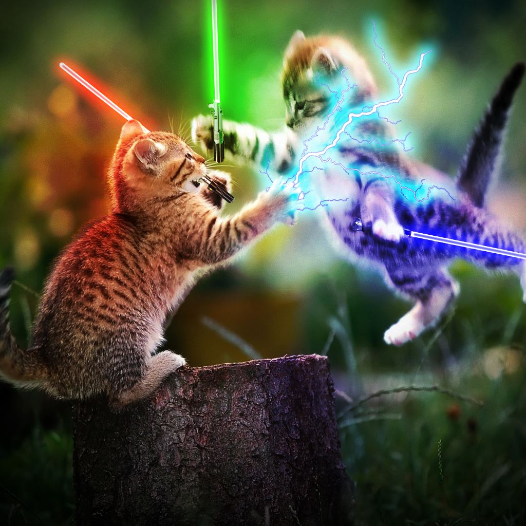 Playing Cute Kittens iPad wallpaper