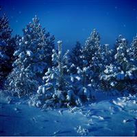 Nature Forest Night Snow Scene iPad wallpaper
