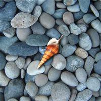 Rocks and Shell iPad wallpaper