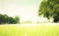 Nature Field Landscape iPad wallpaper