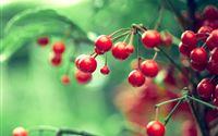Red  Berries iPad wallpaper