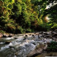Clear River Flowing In The Forest iPad wallpaper
