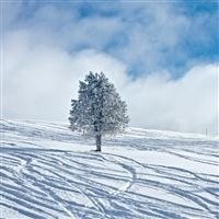 Nature Snow Tree Field iPad wallpaper