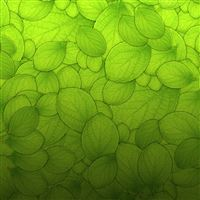 Pure Green Leaf Texture Pattern Background iPad wallpaper