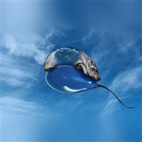 Hippo Bored Ballon Sky Blue Art Illust Animal iPad wallpaper