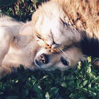 Cat And Dog Animal Love Nature Pure iPad wallpaper
