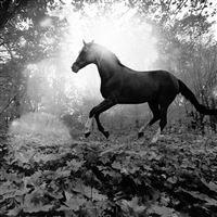 Horse Art Animal Fall Leaf Mountain Flare Dark Bw iPad wallpaper