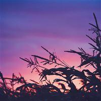 Sunset Field Forest Grass Flower Beautiful iPad wallpaper