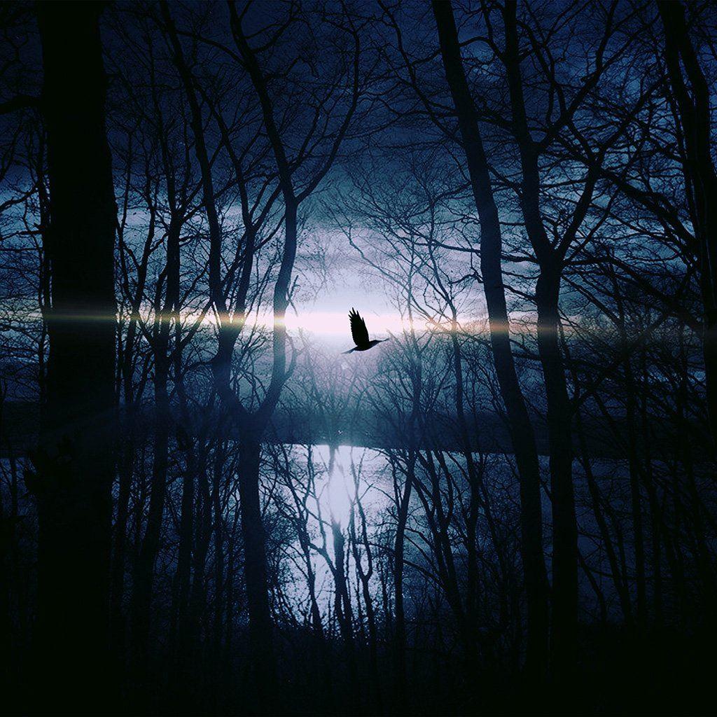 Wood Night Dark Nature Bird Fly Lake iPad wallpaper