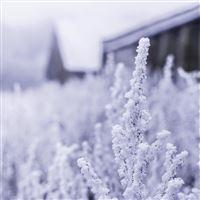 Snow White Winter Flower Blue iPad wallpaper