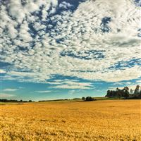 Fall Yellow Field Cloud Nature iPad wallpaper