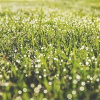 Lawn Green Spring Bokeh Light iPad wallpaper