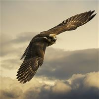Eagle Flight Sky Wings Clouds iPad wallpaper