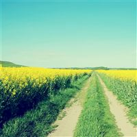 Nature Cole Flowers Field Path iPad wallpaper