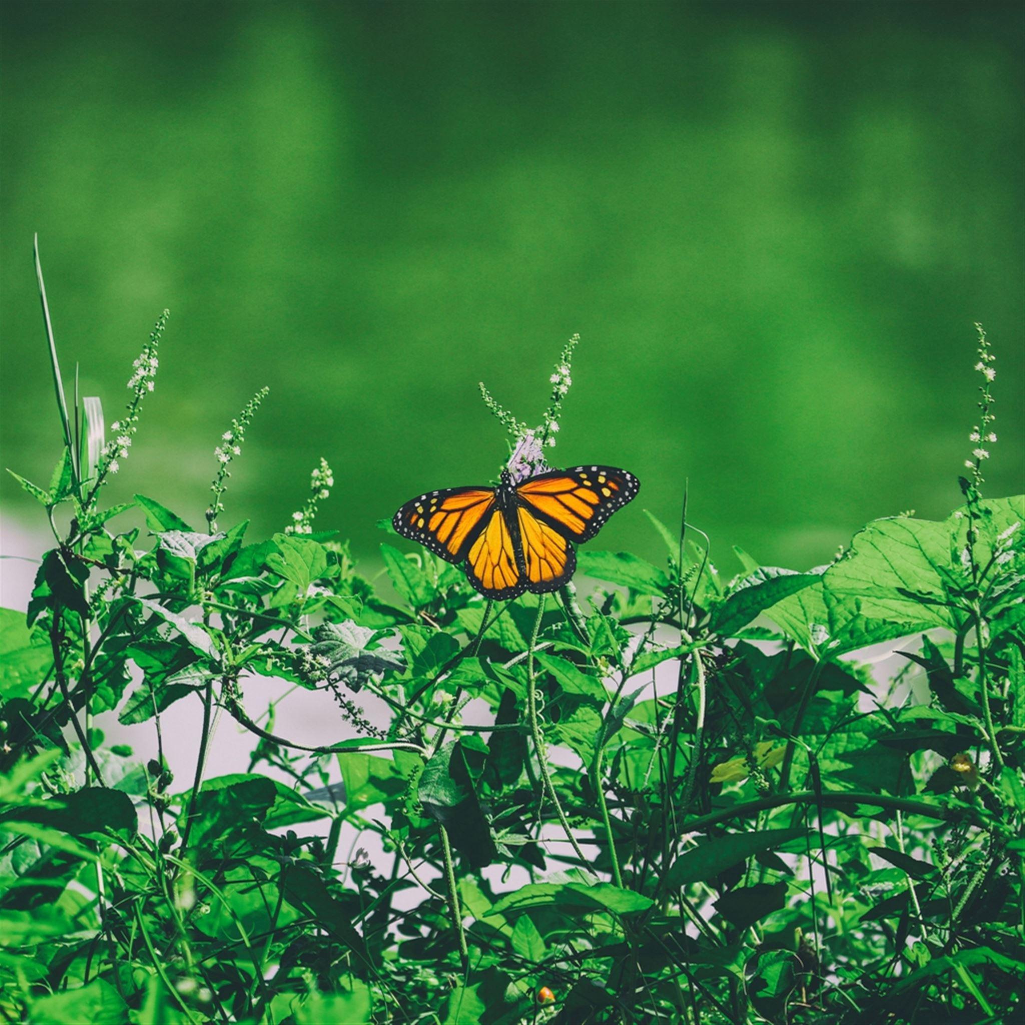 Butterfly Grass Flowers iPad wallpaper