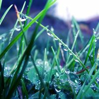 Grass morning dew drops light iPad wallpaper