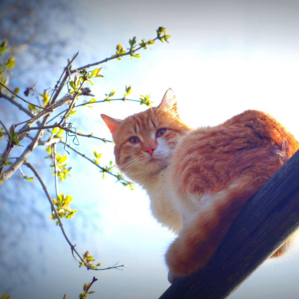 Spring cat animal morning sun mustache iPad wallpaper