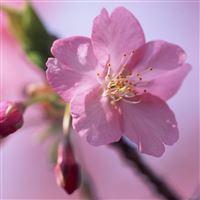 Flower iPad wallpaper
