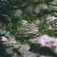 The micro moss iPad wallpaper