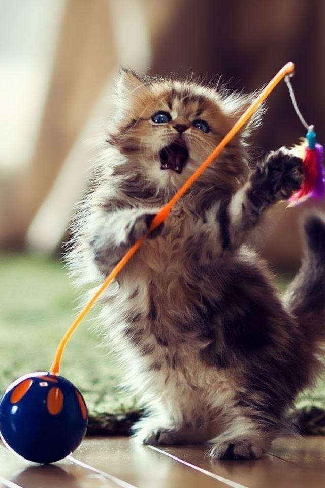 Lovely Playful Kitten IPhone 4s Wallpaper