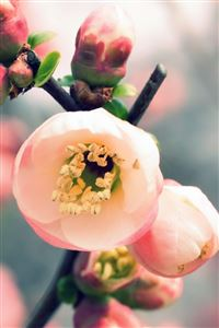 Welcome Spring iPhone 4s wallpaper