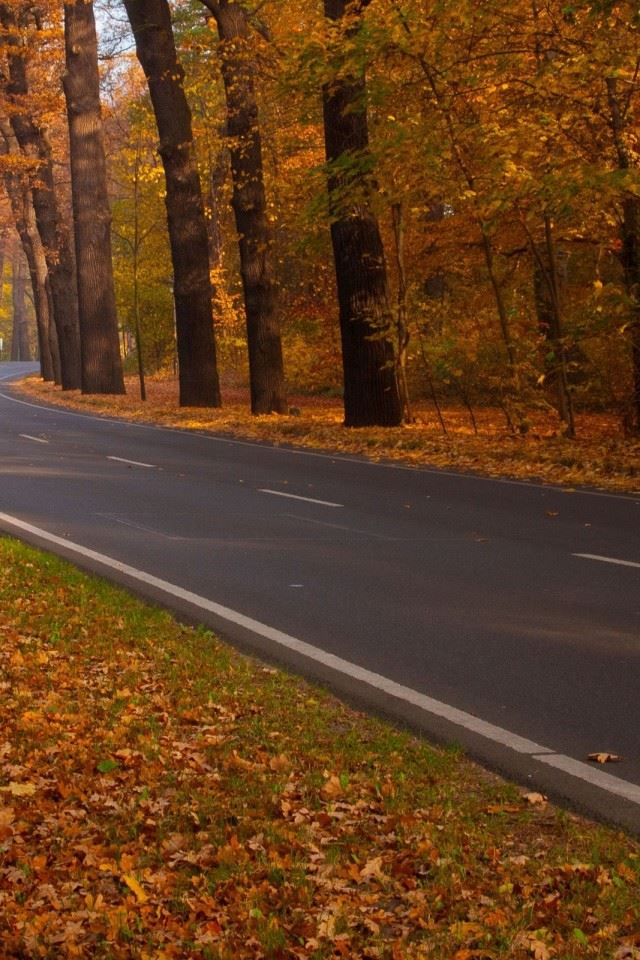 Trees Leaves Roads iPhone 4s wallpaper