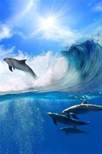 Surfing iPhone 4s wallpaper