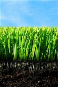 Nature Green Plant Leafy Field Root Soil iPhone 4s wallpaper