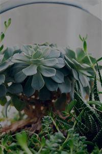 Flower Green House Vase Nature Art Dark iPhone 4s wallpaper