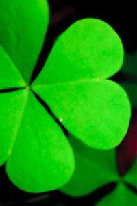 Pure Green Lucky Grass Clover Leaf Close Up iPhone 4s wallpaper