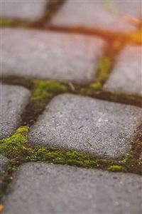 Garden Moss Stone Nature Road City Flare iPhone 4s wallpaper