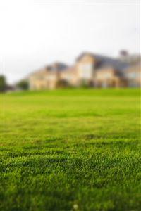 Garden Nature Green Lawn iPhone 4s wallpaper