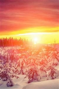 Wonderful Winter Trees Brilliant View iPhone 4s wallpaper