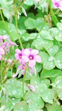 Flowers Lawn Green Drops Dew iPhone 4s wallpaper