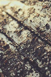 Boat Sunrise Tree Texture iPhone 4s wallpaper