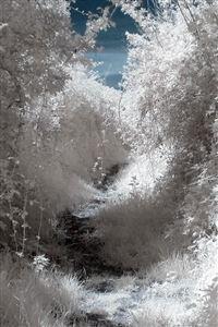 White Wood Mountain Tree Snow Winter Nature iPhone 4s wallpaper