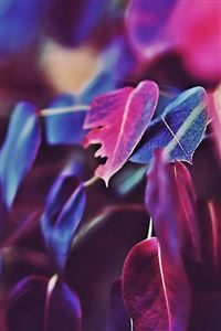 Fall Leaf Flower Bokeh Nature iPhone 4s wallpaper