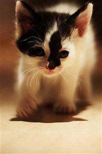 Cute Walking Speckle Little Kitten Cat iPhone 4s wallpaper