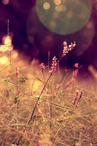 Nature Grass Lawn Flare Scenery iPhone 4s wallpaper