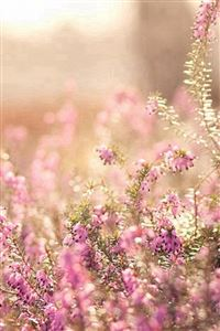 Nature Spring Bloomy Flowers Blurry iPhone 4s wallpaper