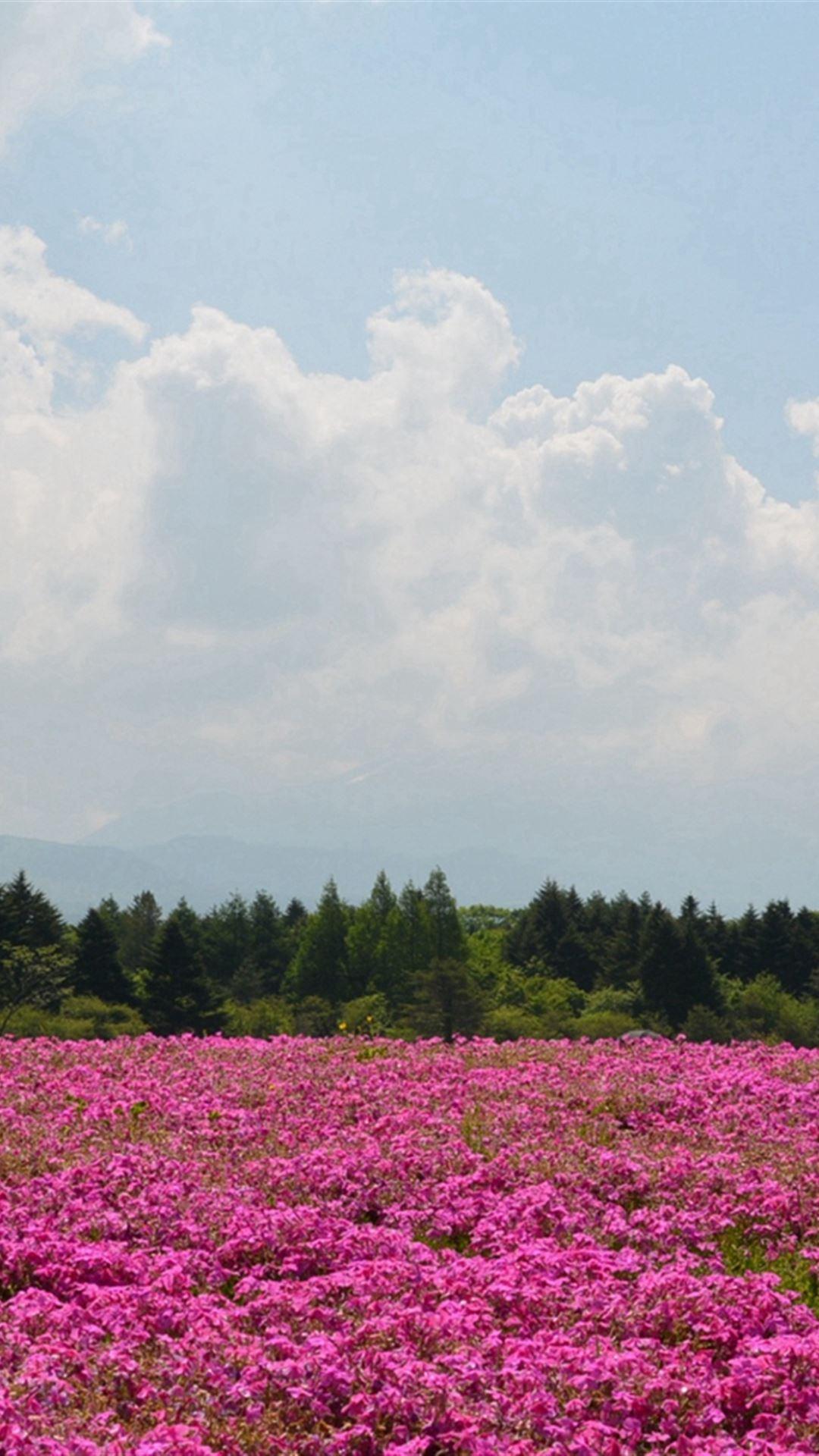 Field Flowers Pink Summer iPhone 4s wallpaper