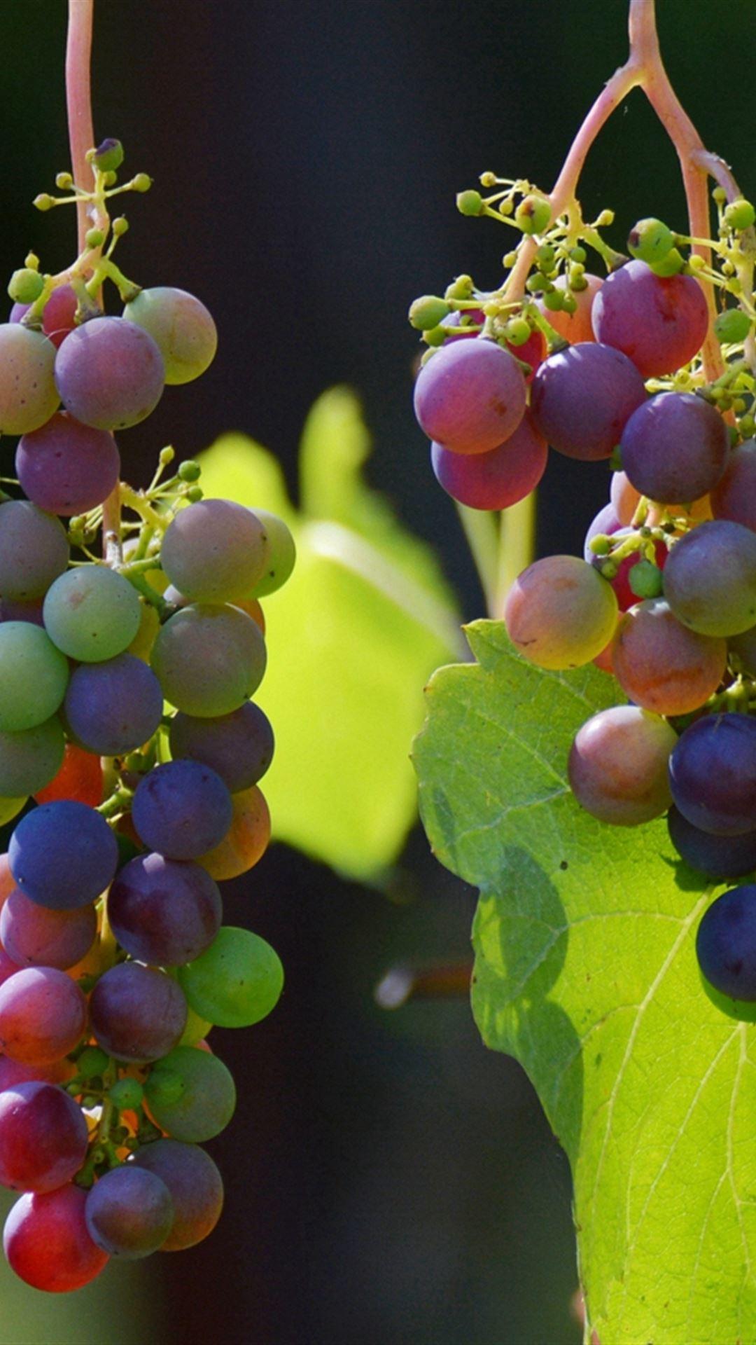 Grapes Vines Berries iPhone 4s wallpaper